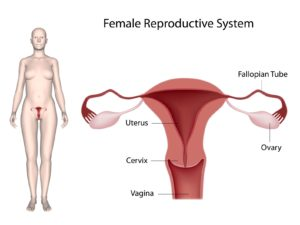Heavy Menstrual Bleeding – Brockville Obstetrics and Gynecology